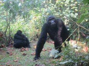 17-1-gorillagruppe2